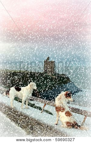 Winter Beach And Castle View With Two Dogs