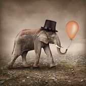 stock photo of apologize  - Elephant with a orange balloon - JPG