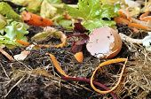image of humus  - various wastes with eggs and vegetable for composting - JPG