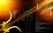 image of human body  - Digital illustration of  human body in colour  background - JPG
