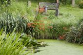 stock photo of crocosmia  - Wooden Bench Seat Overlooking Montbretia  - JPG