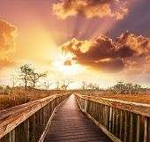 stock photo of swamps  - Boardwalk in swamp - JPG