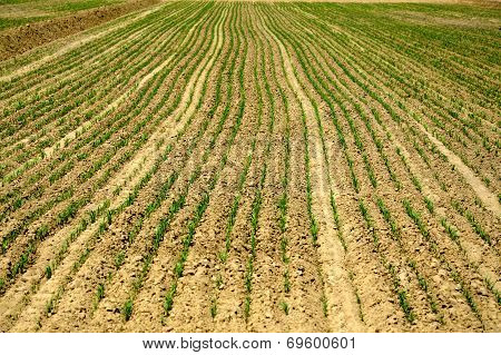 Field, Arable Land.