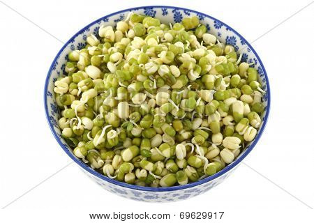 A bowl of soaked Mung Bean (Green gram) Sprouts with green skins.