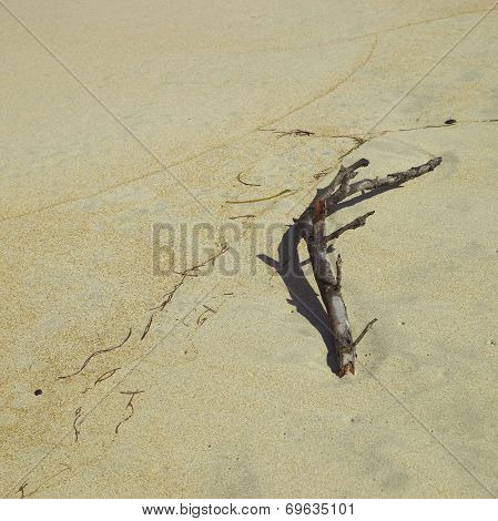 Branch On Sand