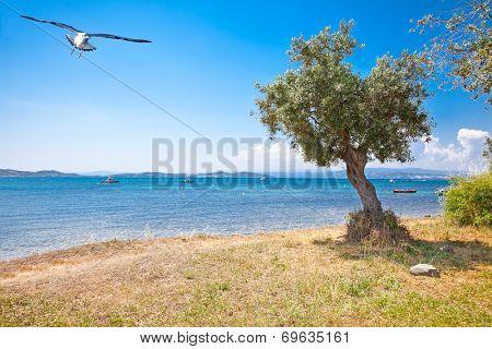 Beautiful panoramic view on Aegean sea in Ouranoupolis, Athos peninsula, Greece.