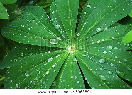 Large Green Leaf With Water Drops