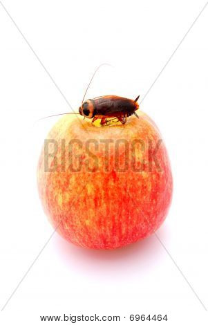 Apple with cockroach