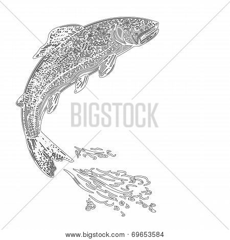 Leaping Trout As Vintage Engraved Vector