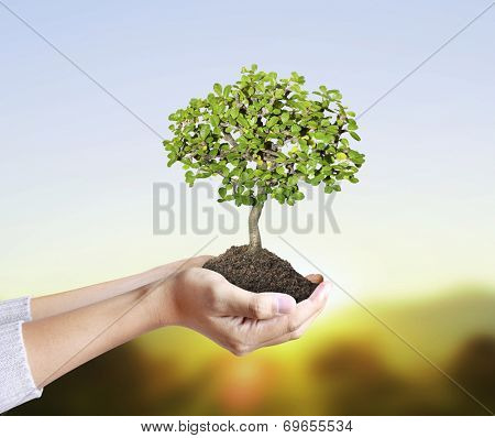 man Hands holding a green young plant,small tree