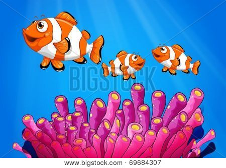Illustration of the clownfishes under the sea