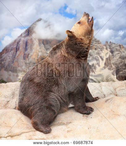 Brown bear (Ursus Arctos) on high mountain range.