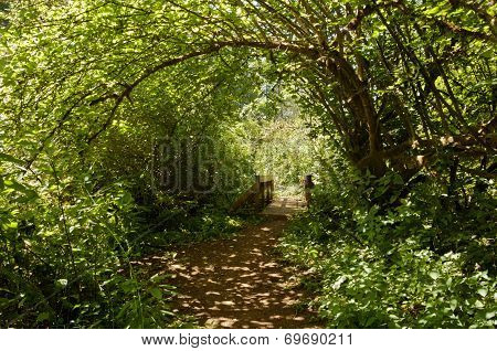 Pathway under canopy of trees