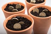 picture of british pound sterling note  - growing coins in ceramic pot on white background