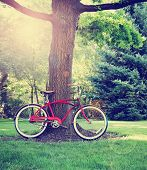image of exercise bike  - a old style bike leaning against a tree toned with a retro vintage instagram filter  - JPG