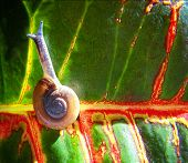 foto of escargot  - a snail on a colorful leaf done - JPG