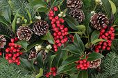 picture of mistletoe  - Winter and christmas background with red holly berry clusters - JPG