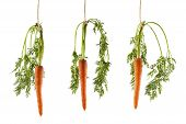 stock photo of dangling a carrot  - Three carrots hanging on a string on a white background as a concept of motivation
