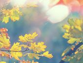 pic of flood-lights  - autumn leaves - JPG