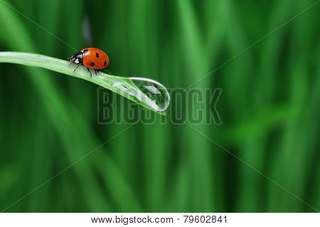 Water Drop On The Grass
