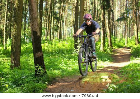 Cyclist In Forest