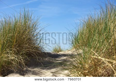 Dune With Marram Grass Close-up