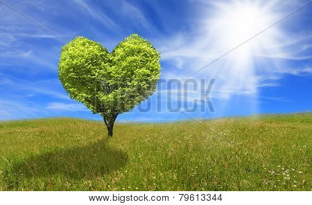 Tree in shape of heart, eco concept
