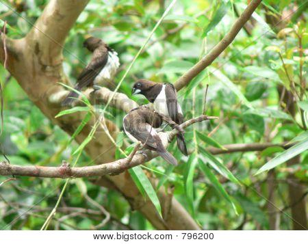 Tres aves después de bañarse