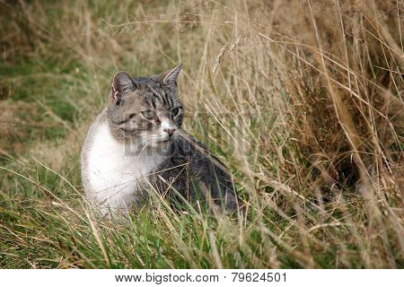 Gray stripped cat
