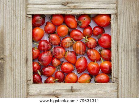 Fresh Red Rose Hips In Old Wooden  Frame
