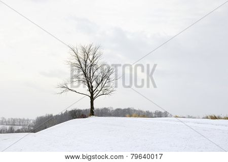 Tree in Rural Setting on Snowy Day