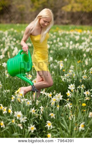Narcissus Field