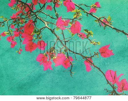 Pink Bougainvillea Flower