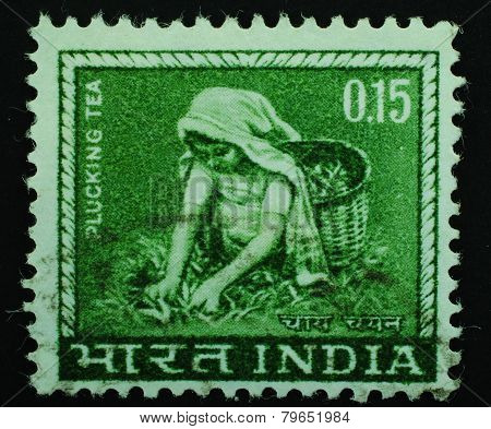 India - Circa 1965: Postage Stamp Printed Slaked In India Shows Image Of A Girl Collecting Tea On A