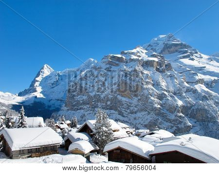 Muerren in the deep winter