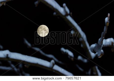 Full Moon With Branches