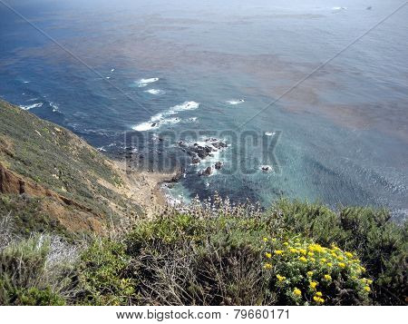 Scene From California Coast With Wildflowers And Kelp