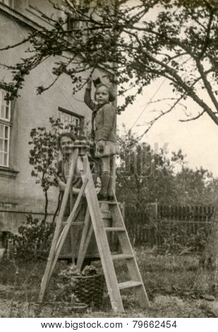 GERMANY, CIRCA THIRTIES: Vintage photo of little girl on ladder picking fruits