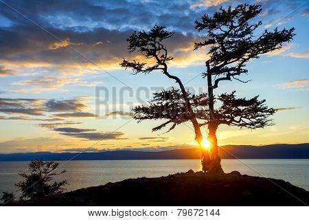 Tree during Sunset on Lake Baikal