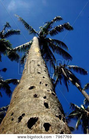 Rugged Palm