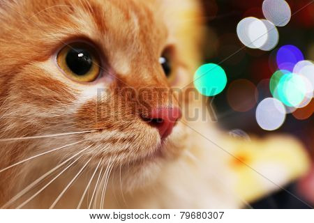 Portrait of lovable red cat on bright background