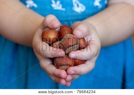 Unpeeled Hazelnuts In Little Girl Hands