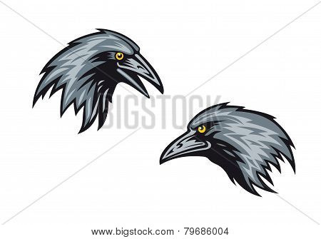 Heads of two blackbirds or ravens