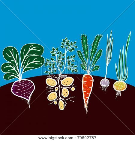 Illustration with growing vegetables.
