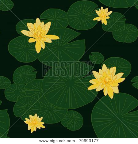 Yellow Lotuses in the pond. Lake Water Lilies. Shadeless ornament.