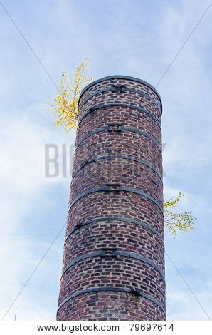 Old Chimney, Fireplace