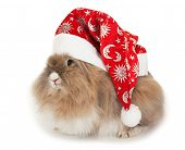 picture of rabbit year  - Lionhead rabbit in the New Year hat - JPG