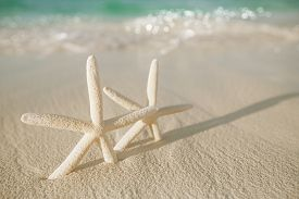 picture of starfish  - white starfish on white sand beach - JPG