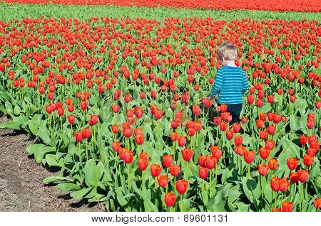 Small boy running on tulips field