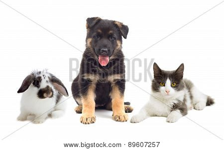 Cat And Dog And Rabbit